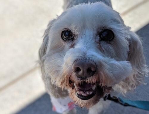 Pet Adoption in Charlotte