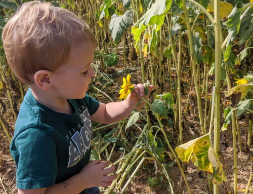 Fall Fun: Farm Activities for the Family