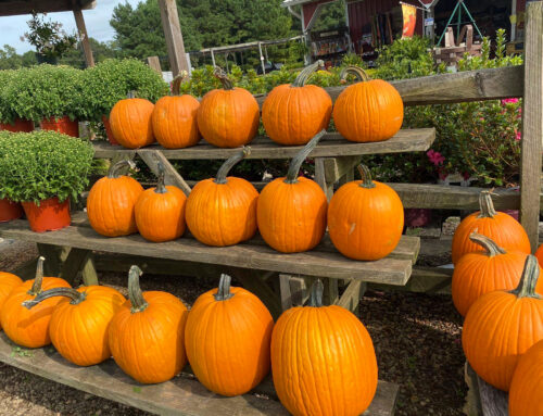 Fall Farms to Visit