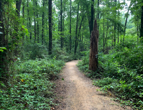 Our Favorite Running Trails in 28205